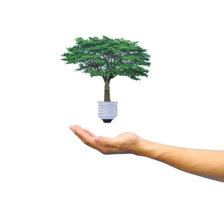 Light bulb in hand (green tree growing in a bulb)  Stock Photo - 10419519