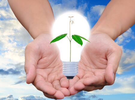 Light bulb in hand (green tree growing in a bulb) Stock Photo - 10709823