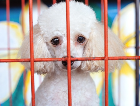 lock up: lonely dog in cage