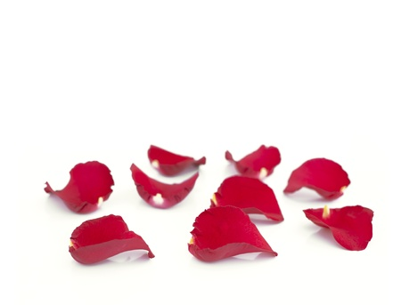 Rose petals isolated on white photo
