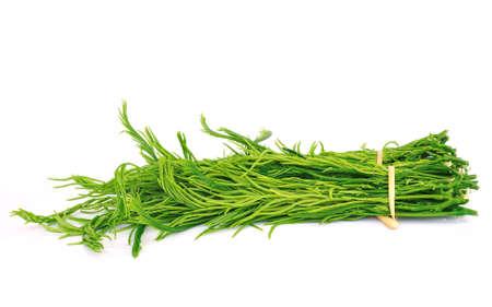 vibrat: cha-om Vegetables