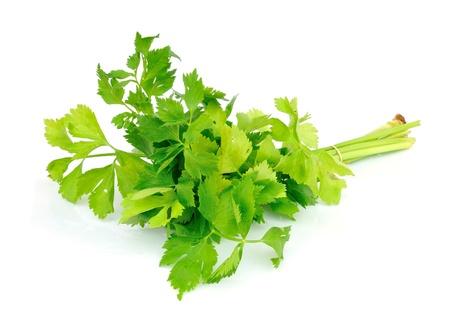 Celery on white background  Stock Photo