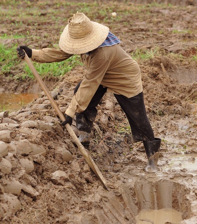 woman digging a soil  photo