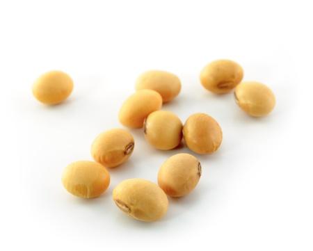 the soya beans  Stock Photo