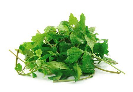 sagebrush: sagebrush vegetables on white background