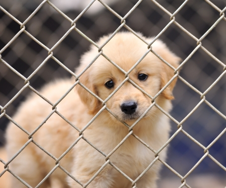 iron bars: lonely dog in cage