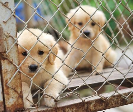 rejas de hierro: perro solo en la jaula