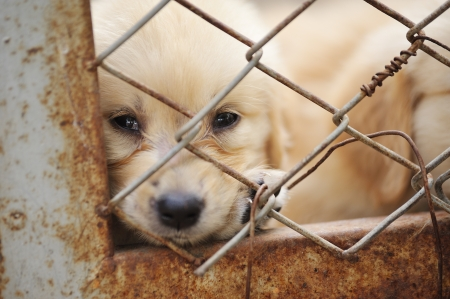 dog kennel: lonely dog in cage