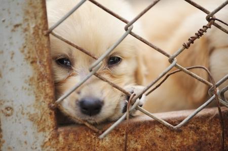 perro triste: perro solo en la jaula
