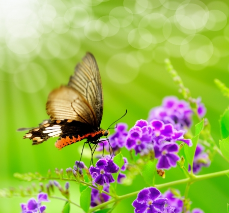 butterfly garden: Butterfly on a flower with light reflect in morning