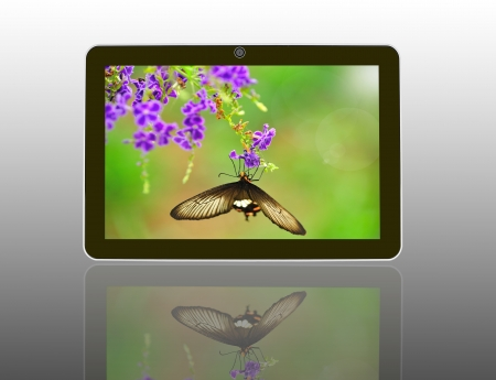 Butterfly on a flower with light reflect in morning in theTablet Computer Stock Photo - 14461632