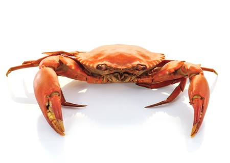crab Stock Photo - 14833149