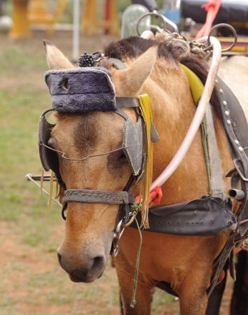 horse head Stock Photo - 17005004