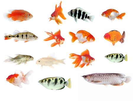 Fish collection with many different tropical fish Stock Photo - 17439906