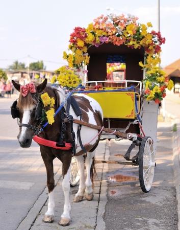horse Stock Photo - 17439913