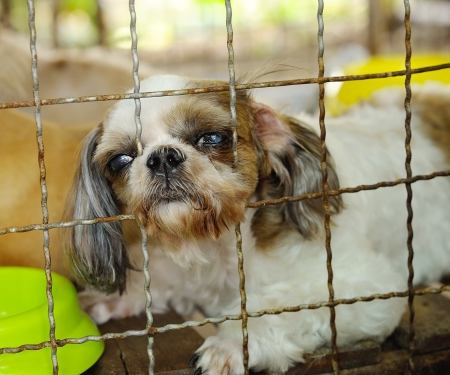 unwelcome: closeup of a dog cage