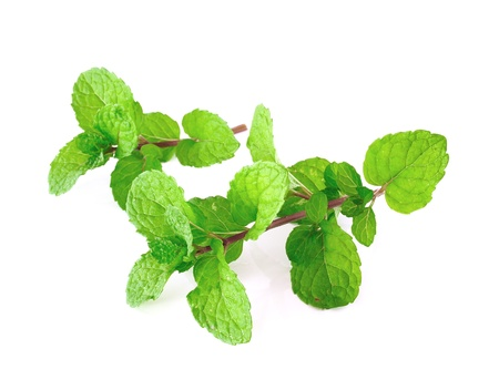 Peppermint or mint bunch isolated on white background  photo