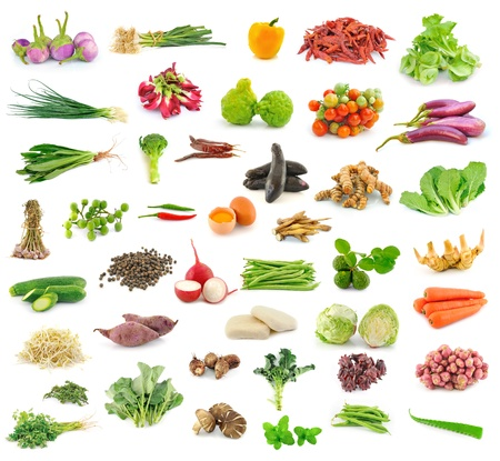 Vegetable and herb collection  on white background photo