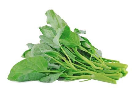 verduras verdes: Vegetales col rizada china en blanco