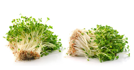 Bean Sprouts on White Background  photo