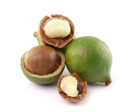 macadamia nuts photo