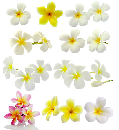 Frangipani flower isolated on white background photo