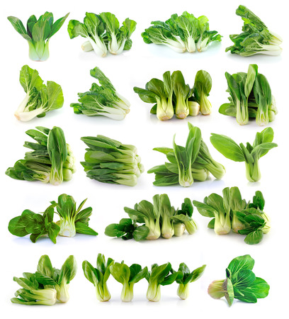 Bok choy (chinese cabbage) isolated on white background photo