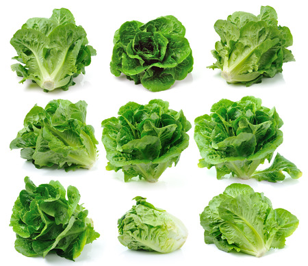 cos: Lettuces isolated on white background Stock Photo