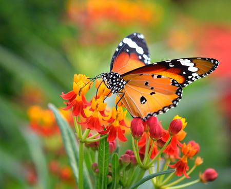 Mariposa sobre flor de naranja