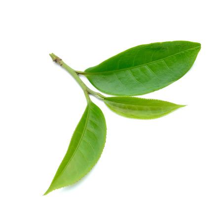 Groene thee blad geïsoleerd op een witte achtergrond Stockfoto