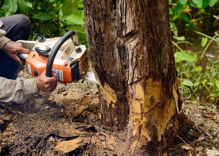 Hombre con motosierra cortar el árbol