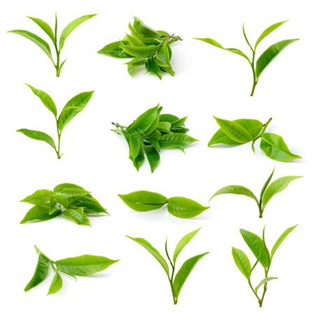 hojas de te: hoja de t� verde sobre fondo blanco