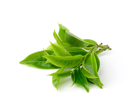 branches and leaves: green tea leaf isolated on white background