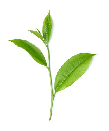 hoja de té aisladas sobre fondo blanco