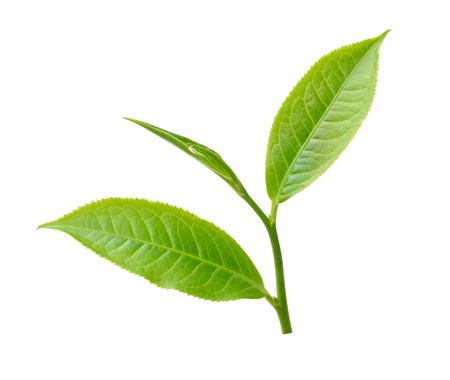 thee blad geïsoleerd op een witte achtergrond Stockfoto