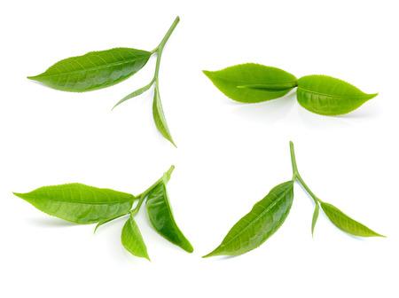 tea leaf isolated on white background photo