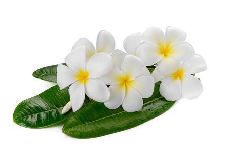frangipani flower isolated white background photo