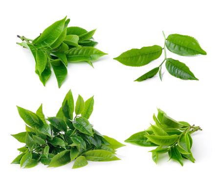 set of tea leaf isolated on white background photo
