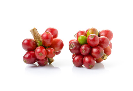 frijoles rojos: los granos de caf� frescos aislados sobre fondo blanco Foto de archivo
