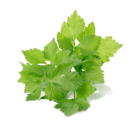 Celery on over white background Imagens
