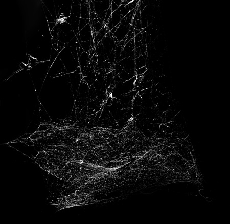 black line: spiderweb on black background Stock Photo