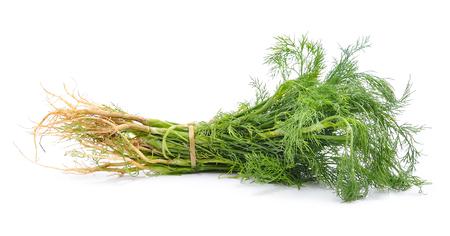 cilantro: Manojo de cilantro sobre fondo blanco