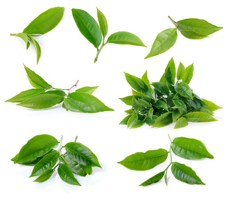 set of green tea leaf isolated on white background