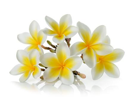 frangipani flower isolated on white on white background photo