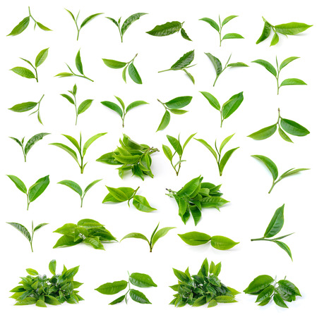 fresh green: Green tea leaf isolated on white background
