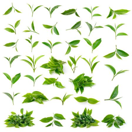Hoja de té verde aislado sobre fondo blanco