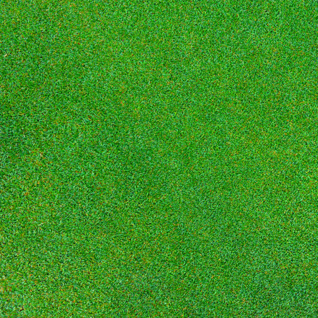 green grass texture for background Banque d'images