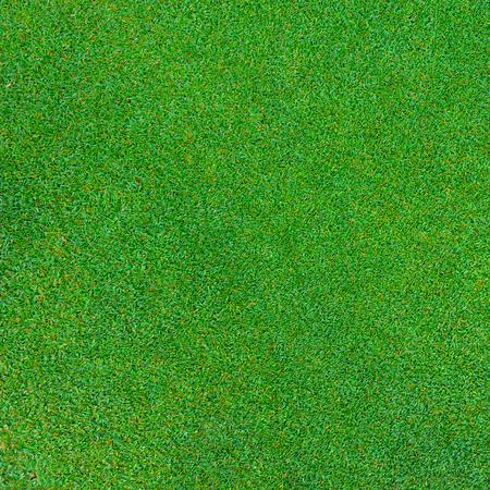 textura de la hierba verde para el fondo Foto de archivo