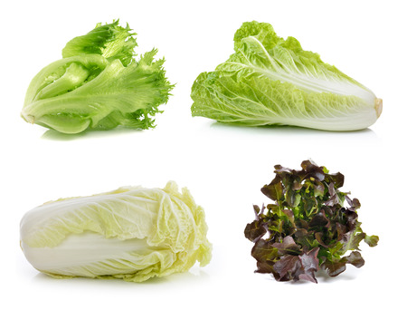 lettuce ,chinese cabbage on a white background photo