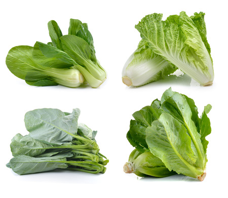 fresh chinese cabbage ,Bok choy, cos , chinese broccoli on white background photo